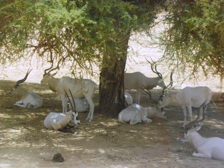 דישונים וראמים בחי בר יטבתה (צילום: נגה רוזנברג)